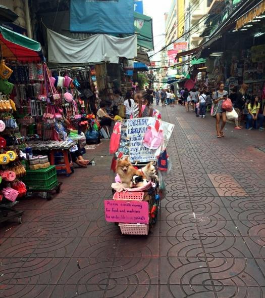 vany visits bangkok chinatown 3